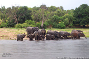 elephant, Big Five, Chobe NP, Botswana, Africa 2011,travel, photography