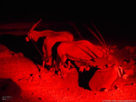 oryx, night drive, Etosha NP, Namibia, Africa 2011,travel, photography,favorites