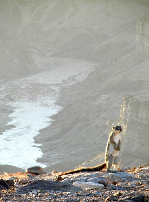 squirrel, Fish River Canyon, Namibia, Africa 2011,travel, photography,favorites