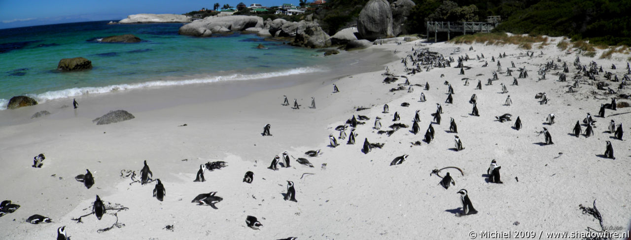 penguin panorama penguin, Penguin Colony, The Boulders, Cape Peninsula, South Africa, Africa 2011,travel, photography, panoramas
