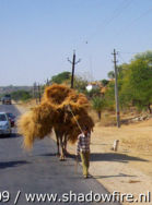 Route 8, Rajasthan, India, India 2009,travel, photography