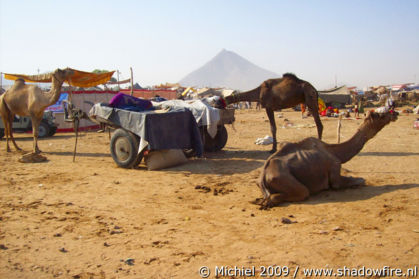 Camel Fair, Pushkar, Rajasthan, India, India 2009,travel, photography