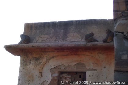 Galta Monkey Temple, Jaipur, Rajasthan, India, India 2009,travel, photography