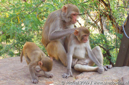Galta Monkey Temple, Jaipur, Rajasthan, India, India 2009,travel, photography,favorites