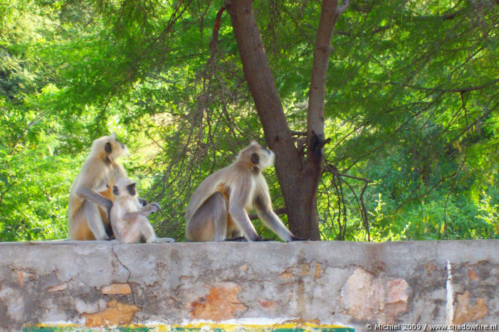 Ranthambhore NP, Rajasthan, India, India 2009,travel, photography