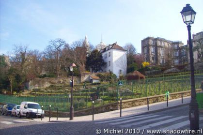 vineyard, Rue Saint Vincent, Montmartre, Paris, France, Paris 2010,travel, photography