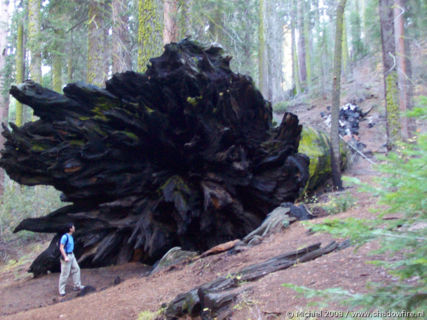 Bear Hill Trail, Giant Forest, Sequoia NP, California, United States 2008,travel, photography