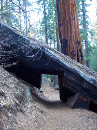 Bear Hill Trail, Giant Forest, Sequoia NP, California, United States 2008,travel, photography,favorites