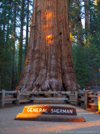 General Sherman tree, Sherman Tree Trail, Giant Forest, Sequoia NP, California, United States 2008,travel, photography