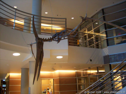 Dinosaur, Life Sciences, University of California, Berkeley, California, United States 2008,travel, photography