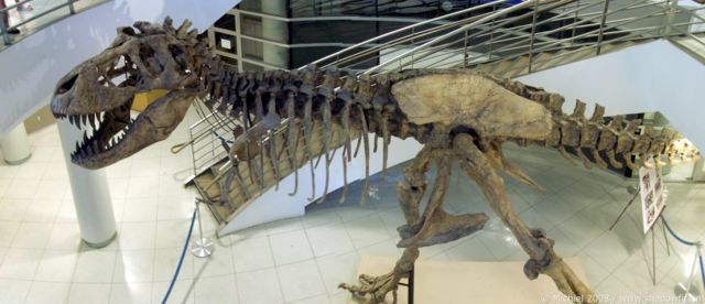 Tyrannosaurus Rex panorama Tyrannosaurus Rex, Life Sciences, University of California, Berkeley, California, United States 2008,travel, photography, panoramas