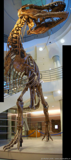 Tyrannosaurus Rex panorama Tyrannosaurus Rex, Life Sciences, University of California, Berkeley, California, United States 2008,travel, photography,favorites, panoramas