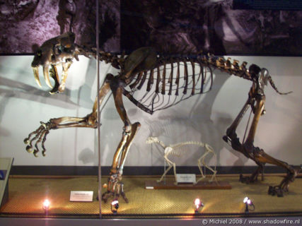 Smilodon Sabertooth cat, Life Sciences, University of California, Berkeley, California, United States 2008,travel, photography