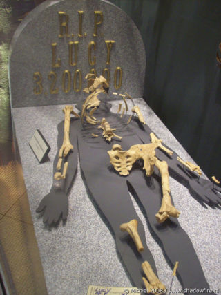 Grave of Lucy, Prehistoric humans, Life Sciences, University of California, Berkeley, California, United States 2008,travel, photography
