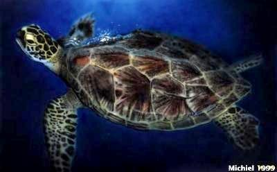 Artwork,Airbrush,Turtle,favorites,animals,sea